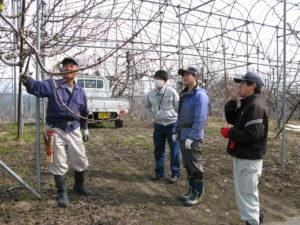 果樹農家での農業体験